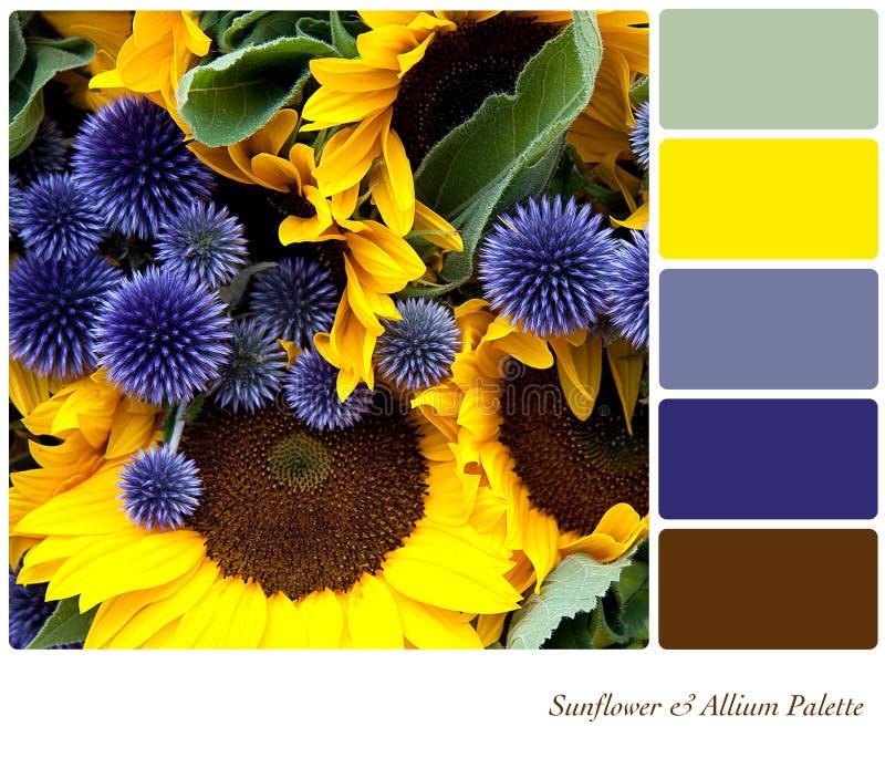 Girasol y gama de colores del allium imagen de archivo