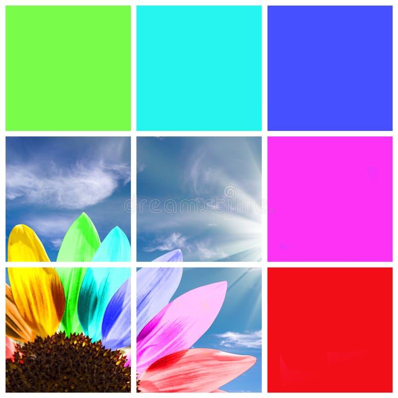 Girasole dell'arcobaleno fotografie stock libere da diritti