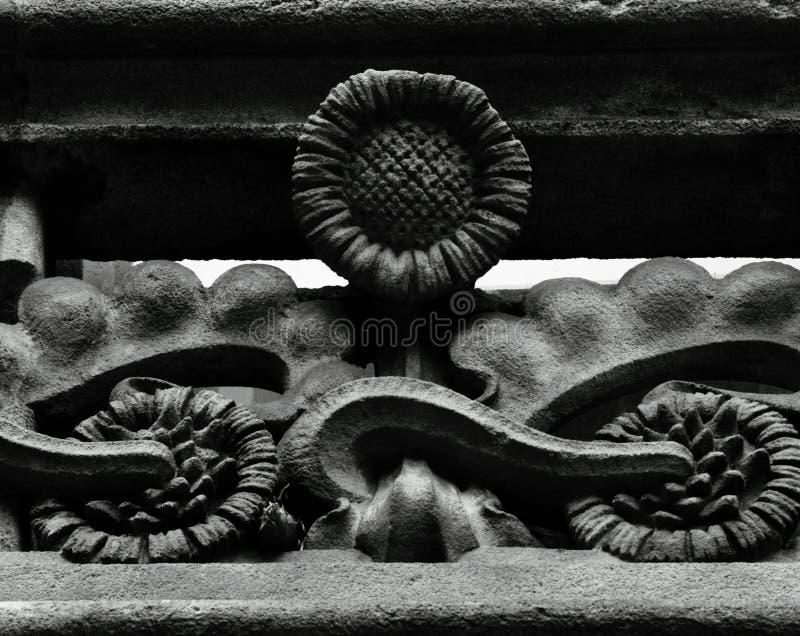 Girasole di fioritura contro il girasole timido immagini stock