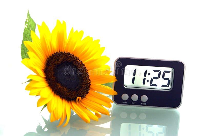 Girasole ed orologio digitale fotografia stock libera da diritti