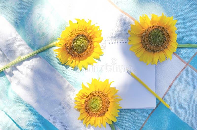 Girasoles con la libreta y el lápiz en el césped con la hierba fotografía de archivo