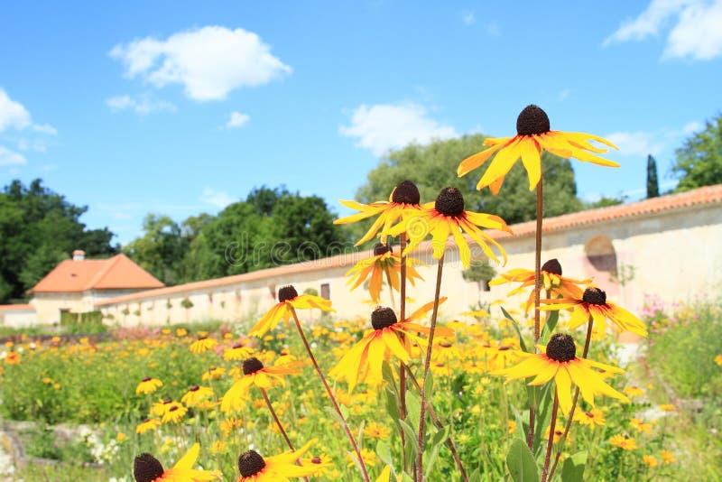 Girasoles de Narrowleaf en jardín en el palacio Kratochvile del renacimiento foto de archivo