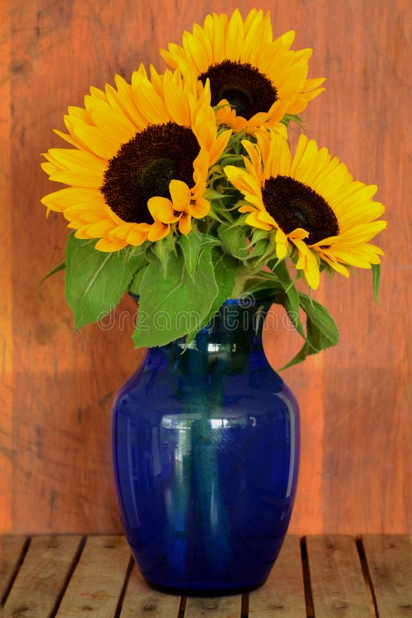 Girasoles en florero azul imagen de archivo libre de regalías