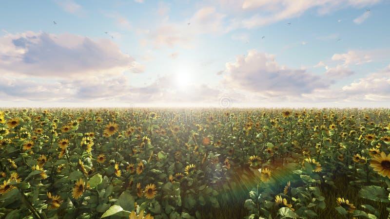 Girasoles hermosos en el campo en la salida del sol Campo con los girasoles, las mariposas y los insectos representaci?n 3d ilustración del vector