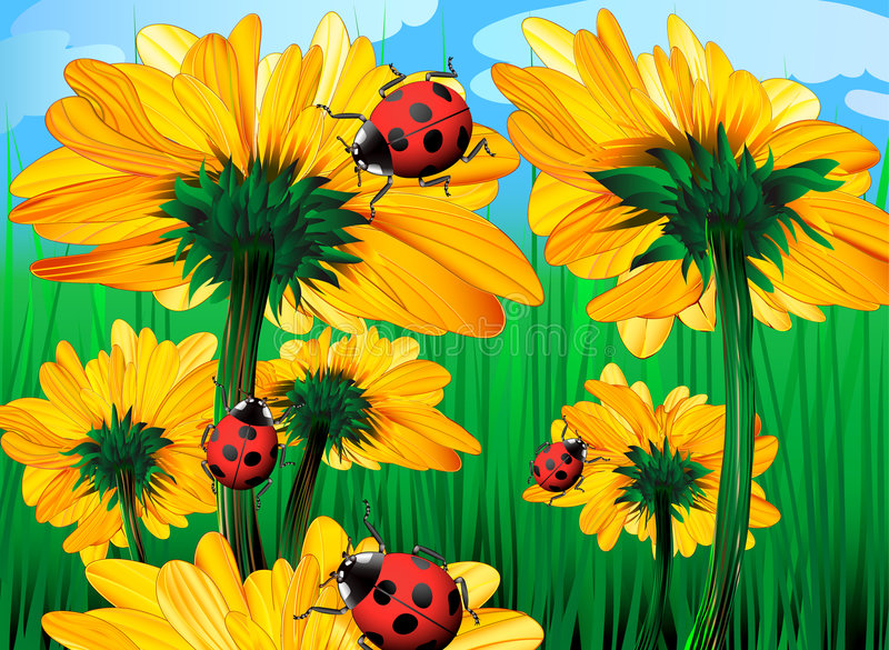 Girasoles y ladybugs libre illustration