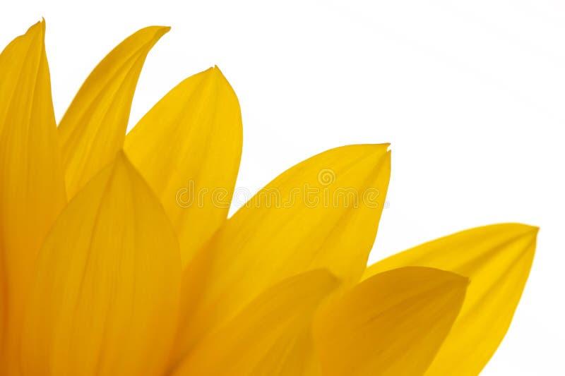 Download Girasoli fotografia stock. Immagine di fiori, fioritura - 7321526