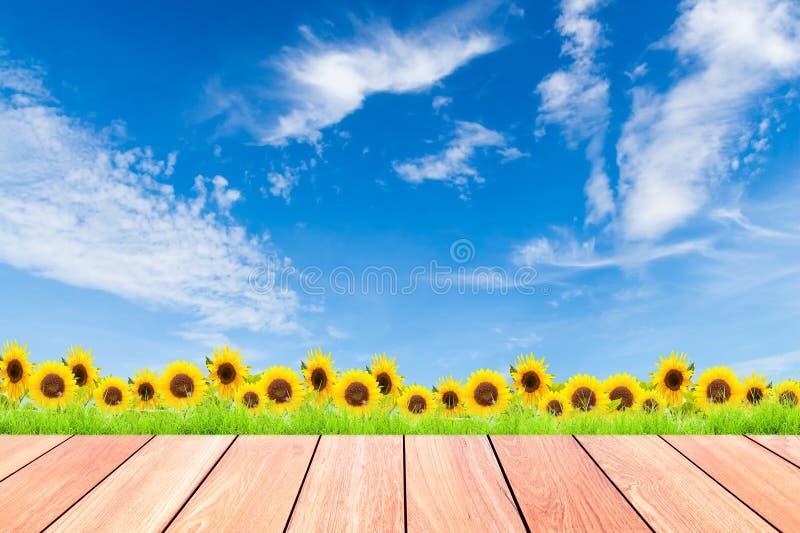 Girasoli con erba verde contro il fondo del cielo blu ed il legno della plancia fotografia stock libera da diritti