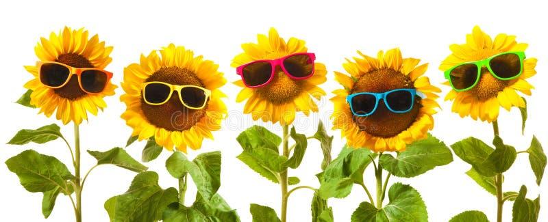 Girasoli con gli occhiali da sole fotografia stock