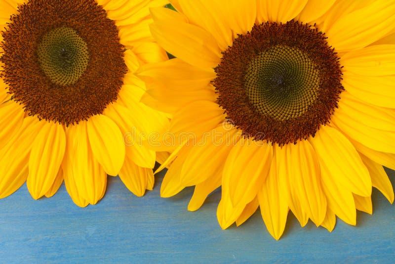 Download Girasoli dell'ansa fotografia stock. Immagine di fiore - 56892154
