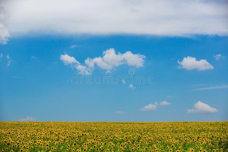 Girasoli in Francia fotografie stock
