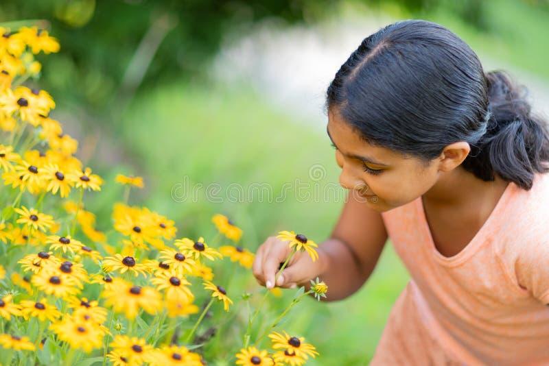 Girasoli pieni d'ammirazione della bambina in un giardino fotografia stock