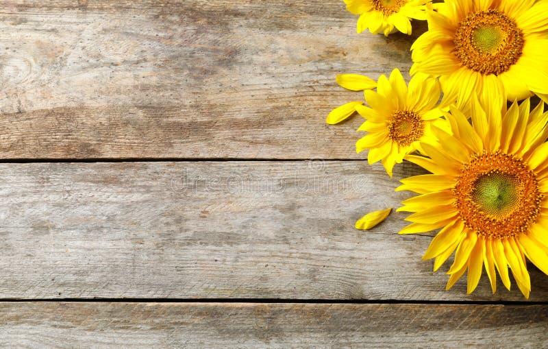 Girassóis amarelos no fundo de madeira, fotografia de stock