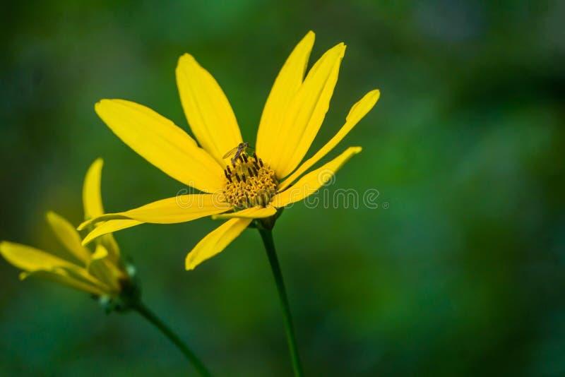 Girassol e inseto abstratos da floresta da vista fotos de stock royalty free