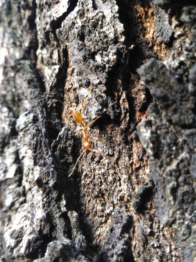 Giri il punto di vista sinistro della formica fotografia stock