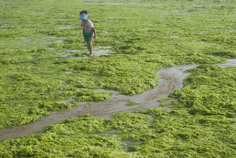 girl in Algae