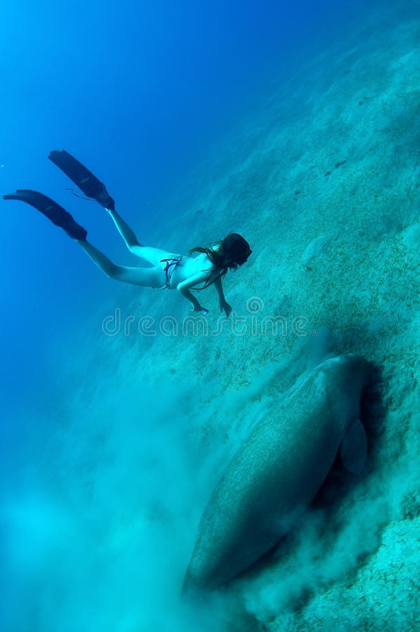 Free Girl And Manatee Stock Images - 13473444