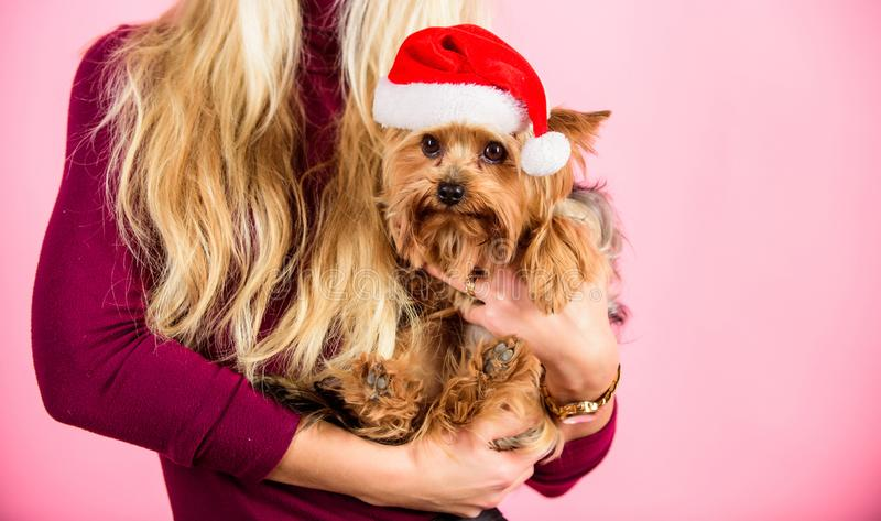 Girl attractive blonde hold dog pet pink background. Woman and yorkshire terrier wear santa hat. Celebrate christmas royalty free stock photography