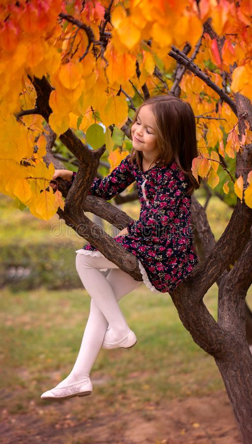 Girl on an autumn tree dreams stock image