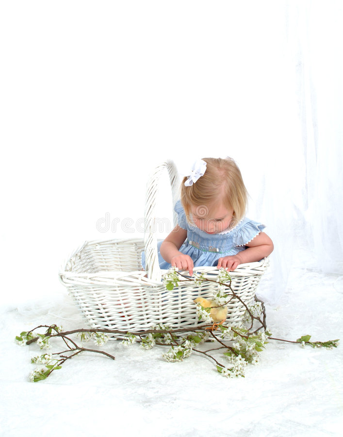 Girl in Basket with Chicken. Girl in blue sitting in basket looking at chicken in front of white background royalty free stock photography
