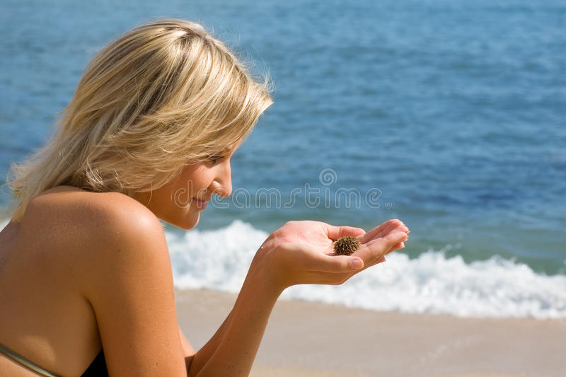 Girl on the beach watching the sea urchin. Attractive girl sitting on the beach and watching the little sea urchin royalty free stock photography