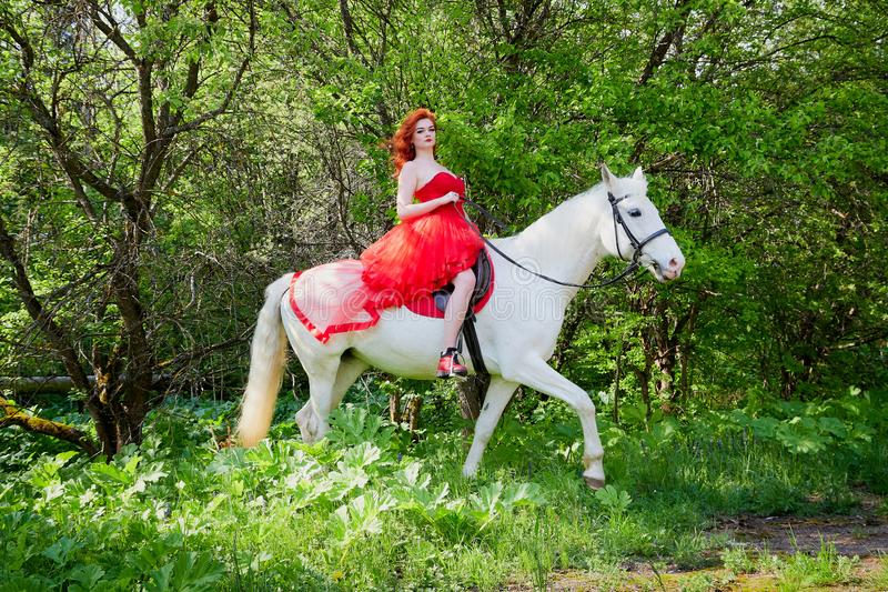 Girl in beautiful red dress on white horse in Park or forest. Photo shoot models and fashion. Unusual posing with an animal in the summer day on nature royalty free stock images