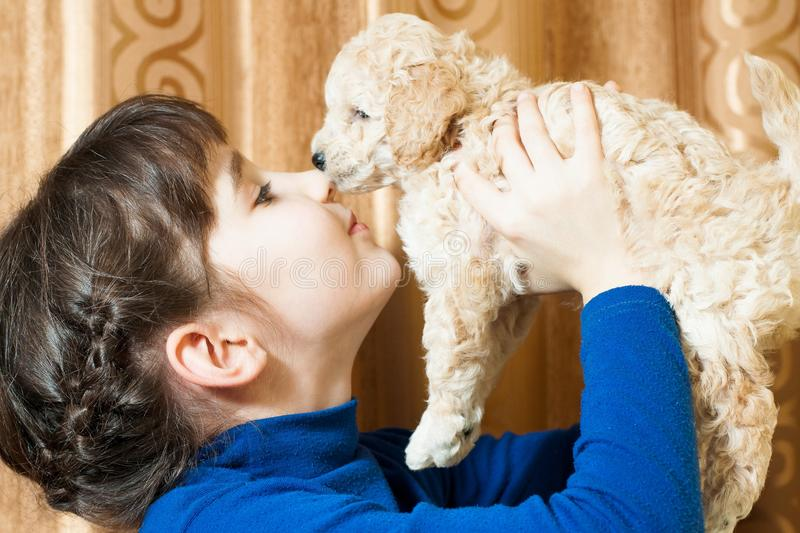 Girl with a beige puppy. Girl with beige breed poodle puppy indoors royalty free stock image