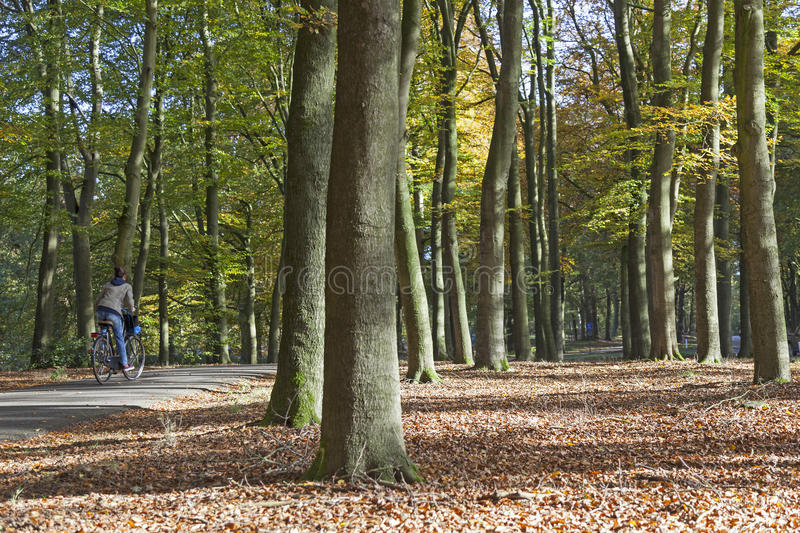 Girl on bicycle in autumn forest near Doorn in the netherlands. Doorn, Netherlands, 31 may 2016: girl on bicycle track in autumn forest near Doorn on utrechtse royalty free stock photos