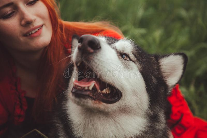 Girl with big grey dog on the nature background at summer time. Lifestyle photo. Pretty redheaded woman in red dress with playful friend dog stock images