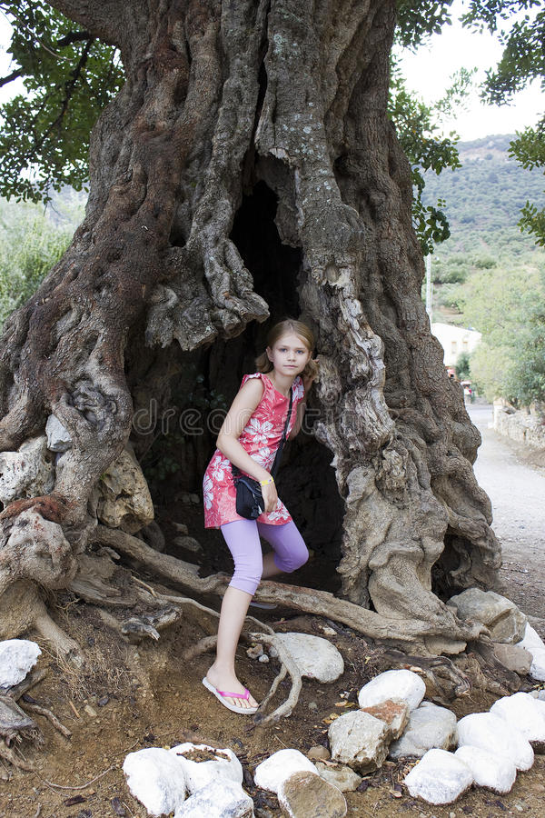 Girl in a big olive tree royalty free stock photos