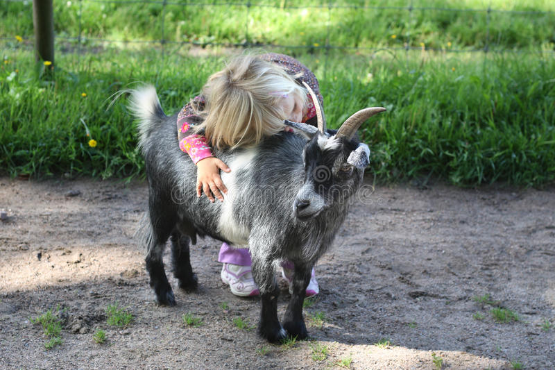 Girl with billy goat stock image
