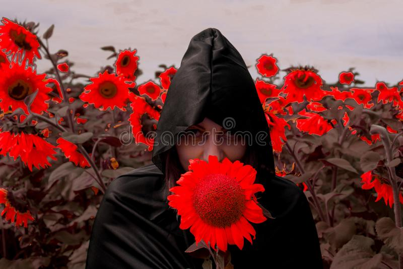 The girl in a black cloak of death against the background of red sunflowers. Concept halloween.  royalty free stock photography