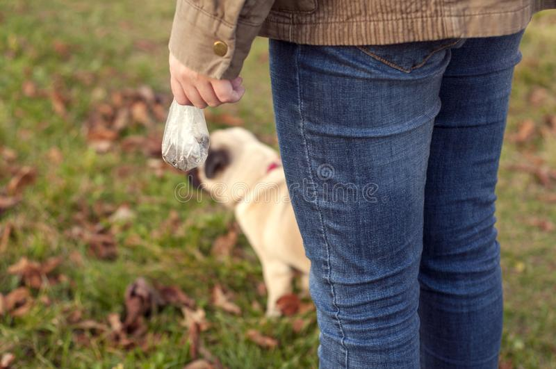 A girl in blue jeans stands with her back and holds in her hands a plastic bag with dog excrement. young pug dog on the background stock photos