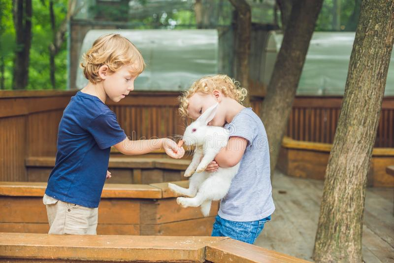 Girl and boy are fed rabbits in the petting zoo stock photo