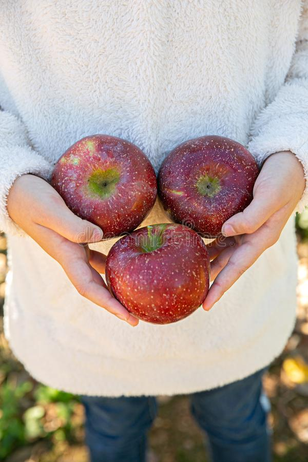 Girl boy holding set of three red juicy apples stock photos