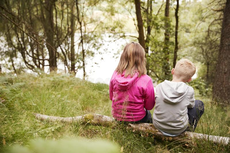 Girl and boy sitting together on a fallen tree in a forest, back view stock images