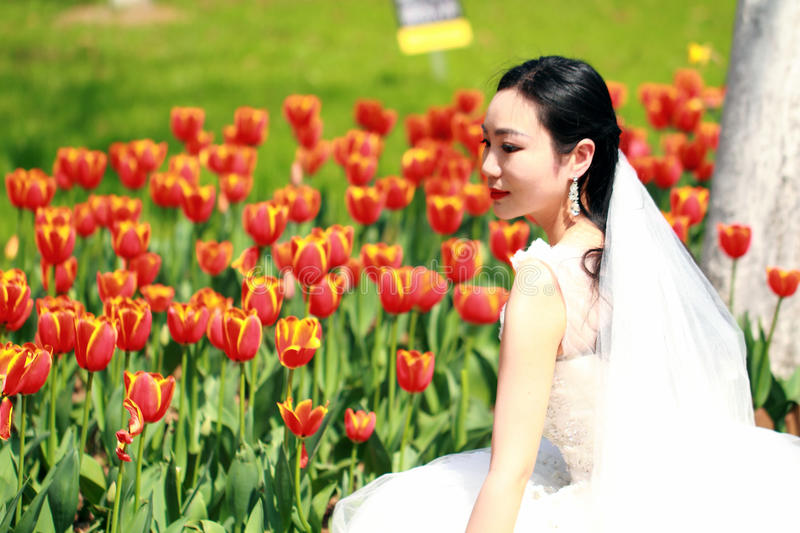 Girl bride in wedding dress with elegant hairstyle, with white wedding dress in red Tulips field stock photos