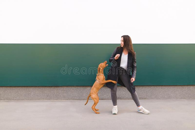 girl and brown dog against a background of colored walls. A girl plays with a puppy while walking royalty free stock photo