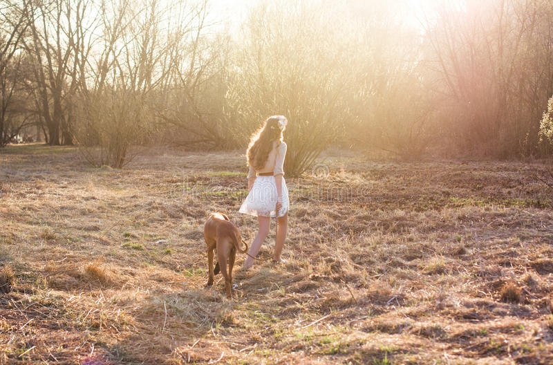 Girl and brown dog royalty free stock image