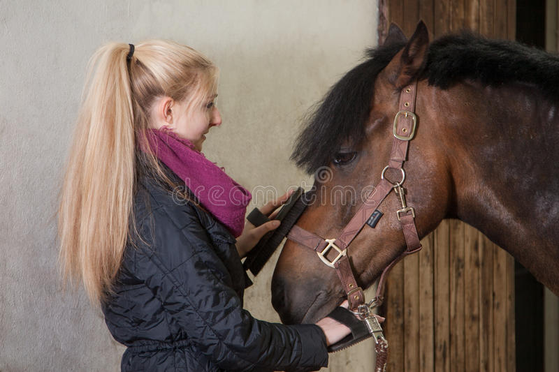 Download Girl brushes her pony stock photo. Image of jacket, woman - 32005720