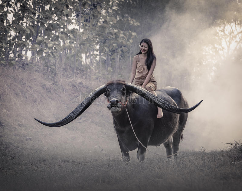 The girl with Buffalo royalty free stock photos