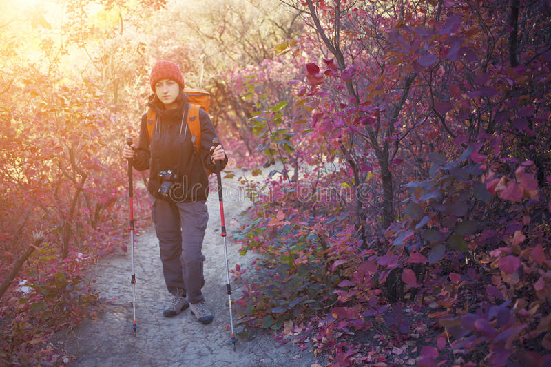A girl with a camera and a backpack. The girl with the camera and the backpack goes on the trail in a beautiful forest royalty free stock images