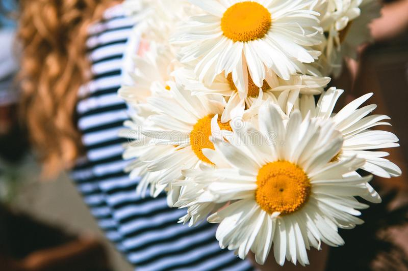 Girl carries a bouquet flowers chamomiles royalty free stock image