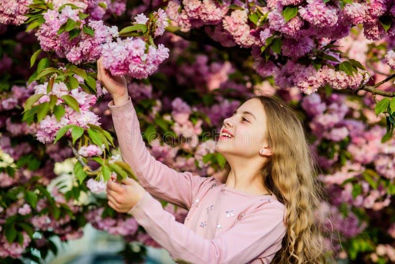 Girl cherry flower background. Happy spring vacation. Park and garden. Girl little child in spring flower bloom. Enjoy. Smell of tender bloom sunny day. Sakura stock images