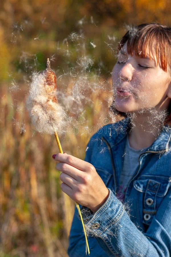 Girl child blows on a cattail in hand and fluff flies in her face royalty free stock photos