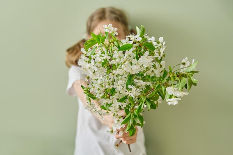 Girl child gives spring white flowers blooming cherry branches, green wall background royalty free stock images