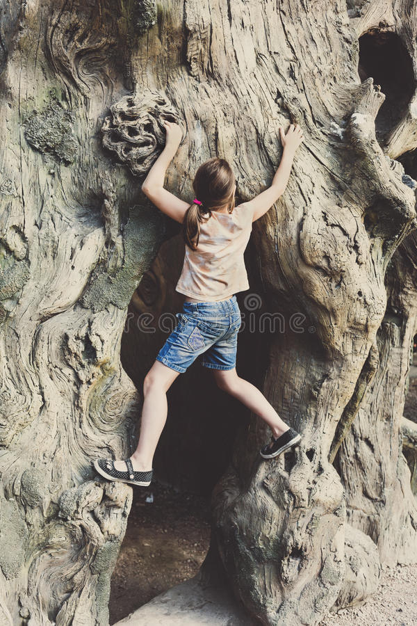 Girl child outdoors climb tree stock images