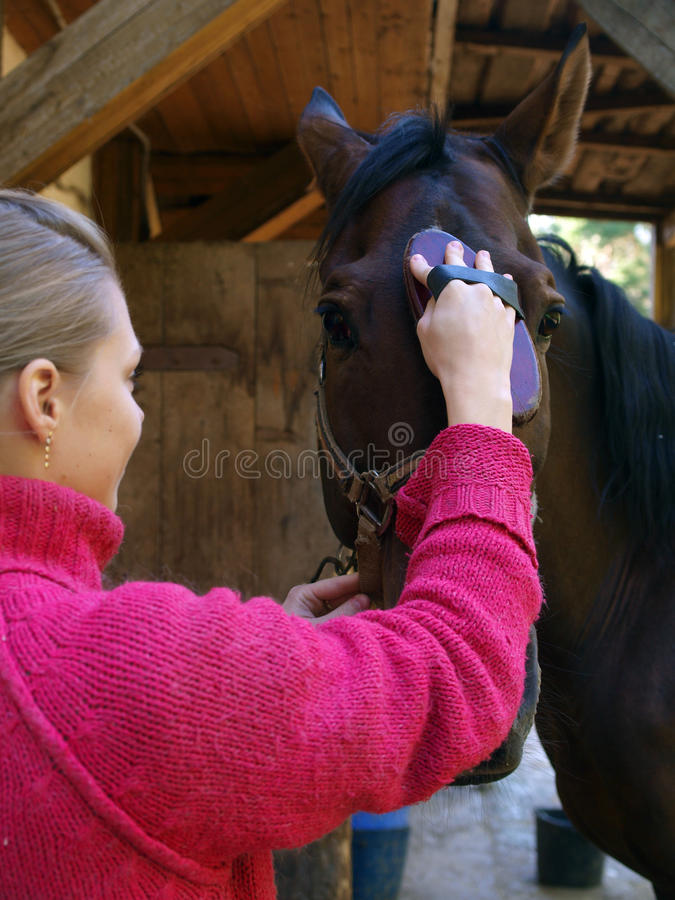 The girl cleans a horse royalty free stock image