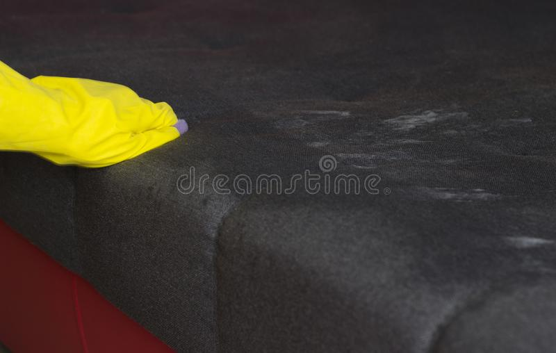 The girl cleans the sofa, close-up stock photos
