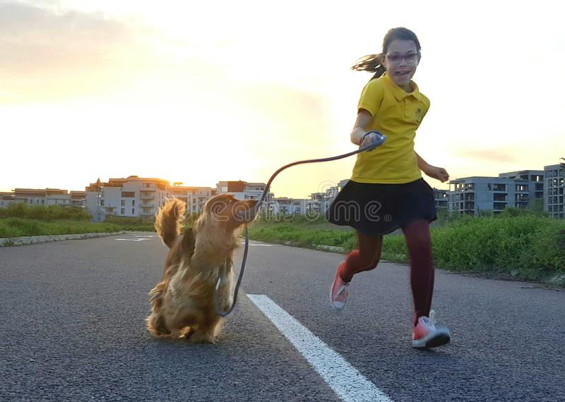 Girl and dog running. Girl in yellow shirt running down the middle of a road with her brown Cocker spaniel on a lead, urban background royalty free stock photos