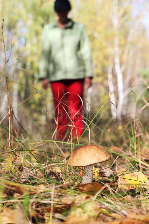 Girl collect mushroom on forest stock photo